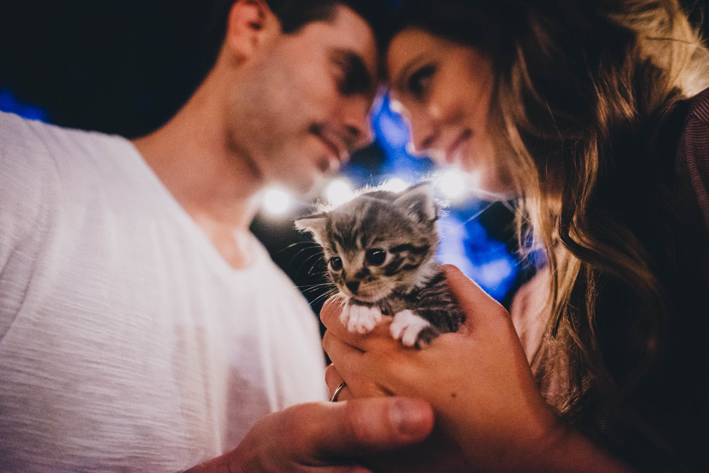 couple posing with their rescued kitten during their engagement photos in Durham, North Carolina
