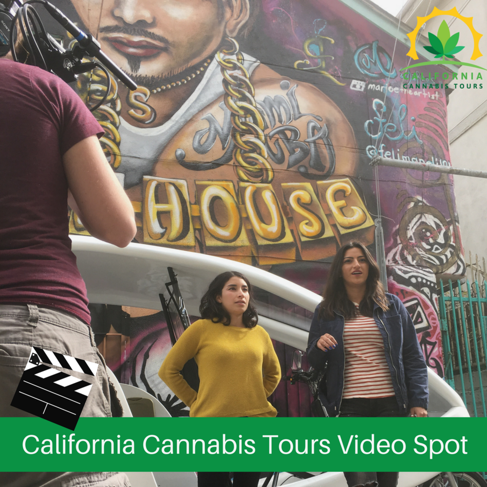 california cannabis tours website spot president shark startup consultants.png