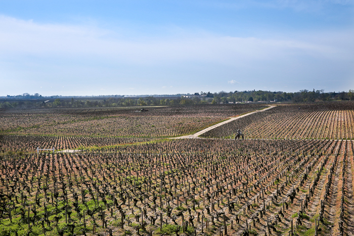 The view of Pontet-Canet's vineyards from the tasting room