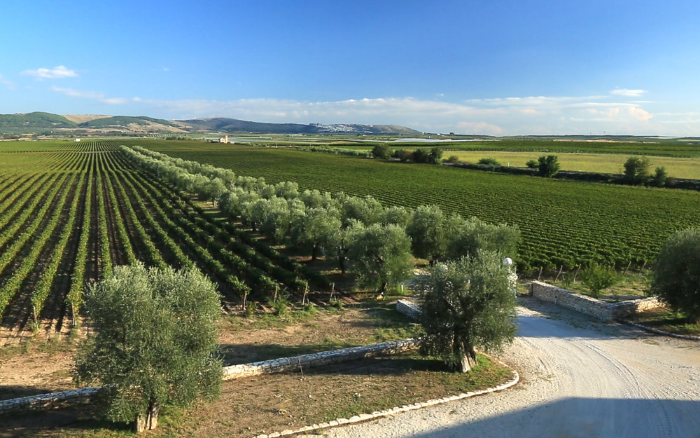 Tomaresca's vineyards in Puglia