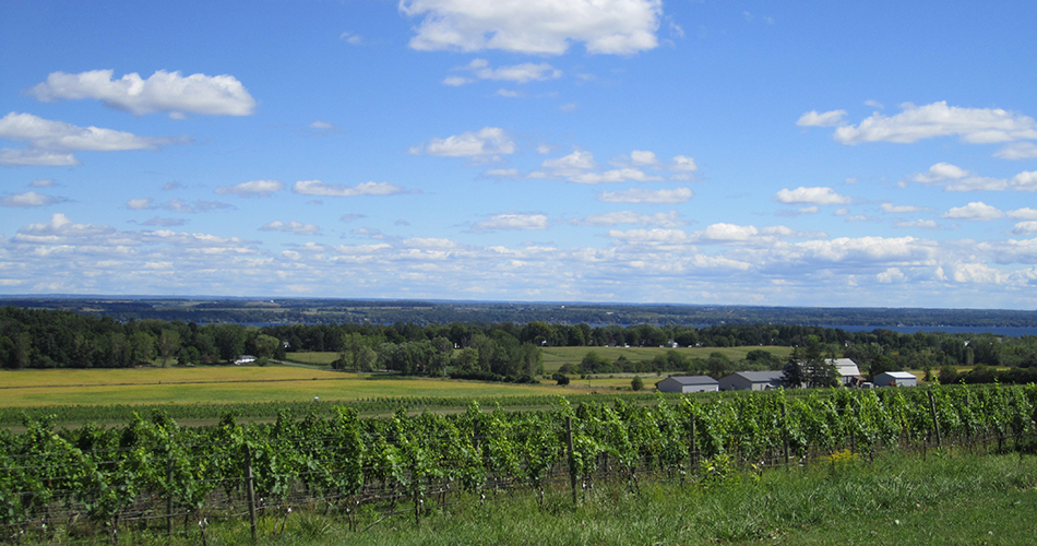 white springs vineyard.jpg