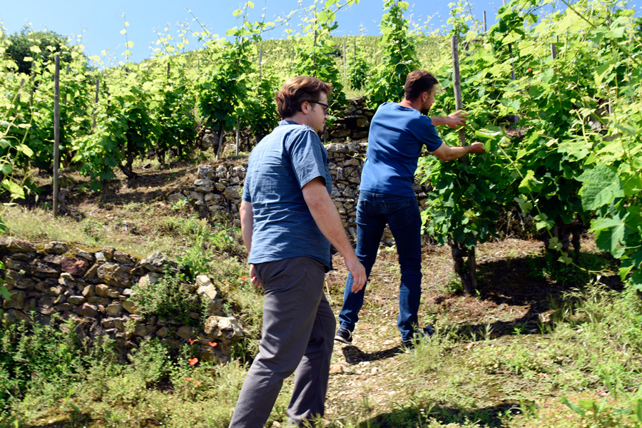Estate vines of Domaine Garon