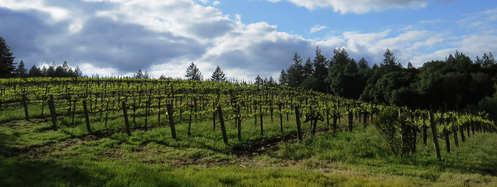 photo-vineyard.jpg