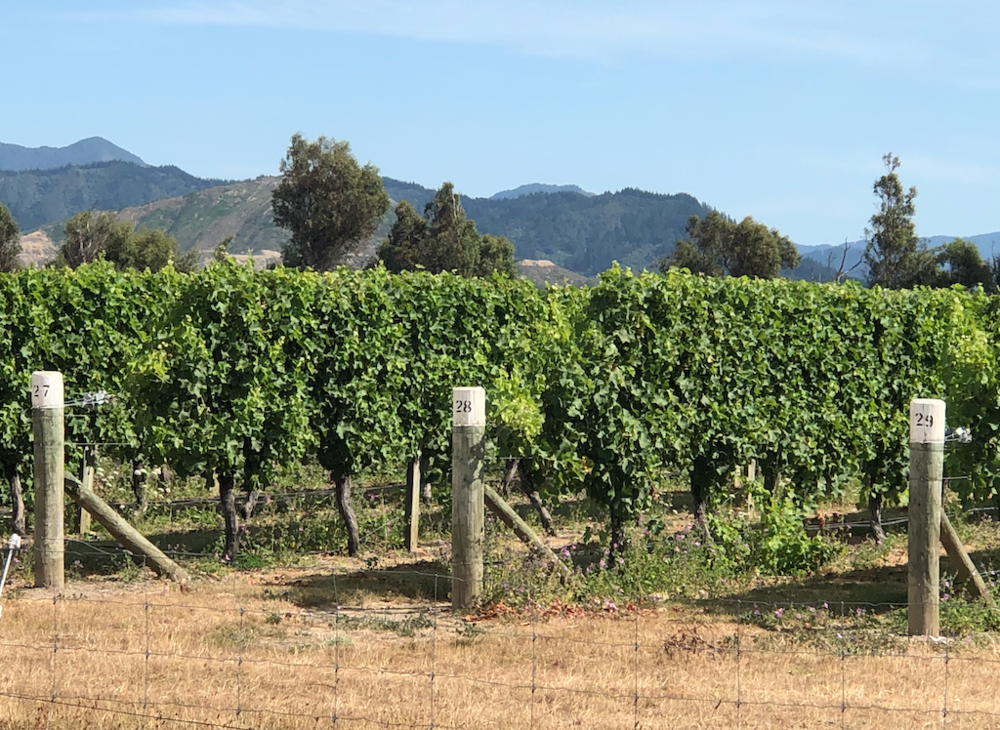 Neighboring Vineyard