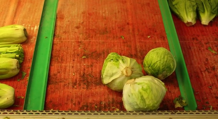 Combating Rural Food Insecurity