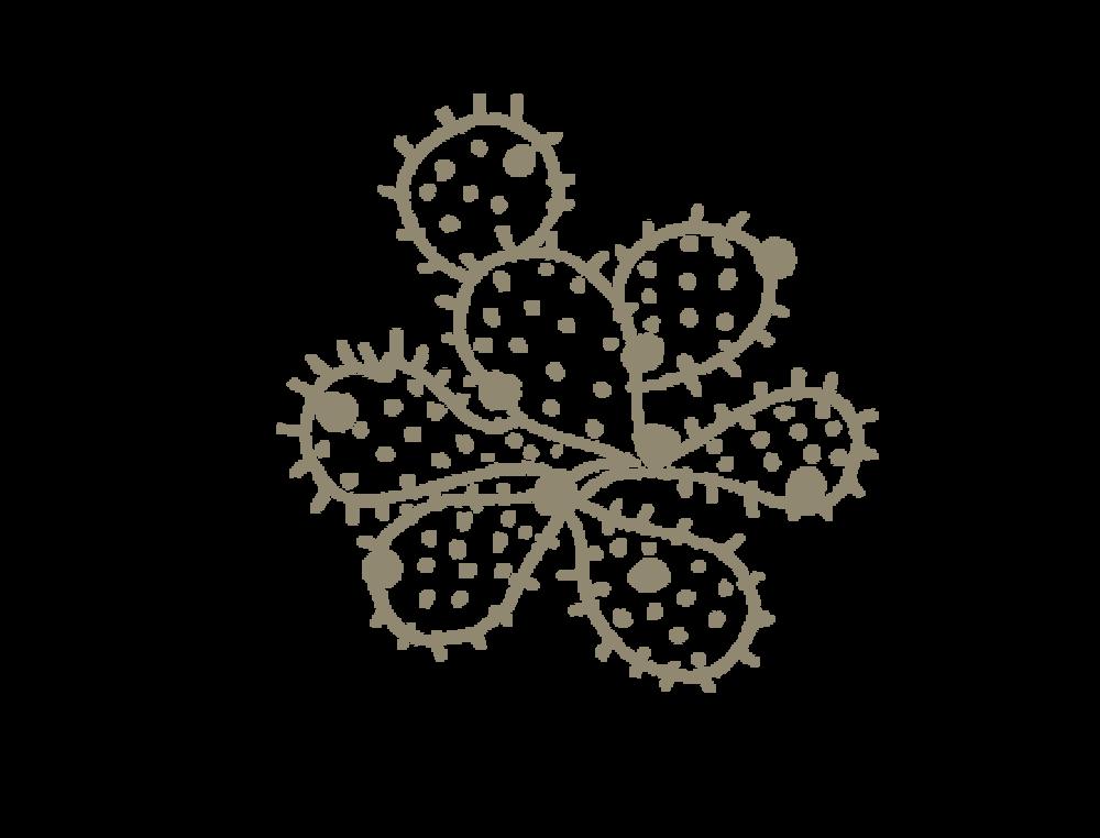 cacti-2.png