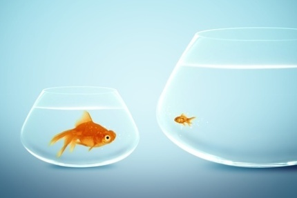 Stock Photo - Big and small goldfish (c) Rawan Hussein