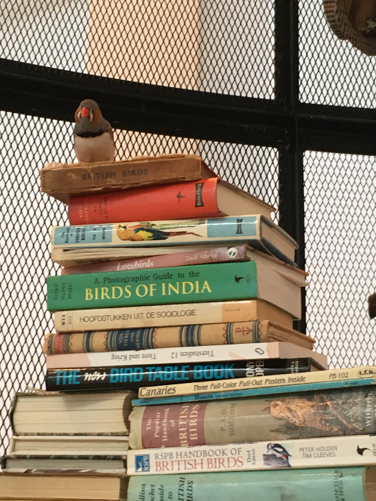 Mark Dion, The Library for the Birds of London (detail), Whitechapel Gallery 2018 @TheWhitechapel