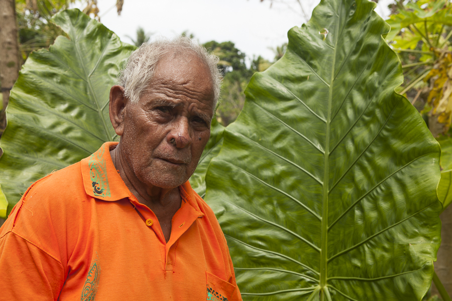 Joel Keise has discovered that Giant Taro from Papua New Guinea can grow well with the proper agricultural practises. Luaniua