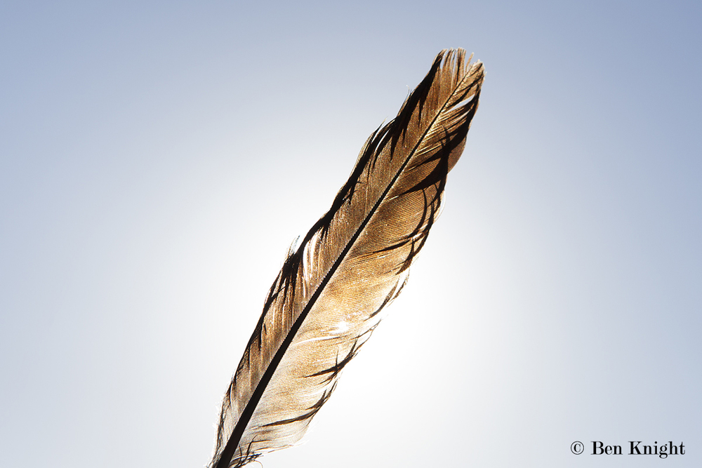 Feather, Point Nepean, Mornington Peninsula, Victoria, Australia