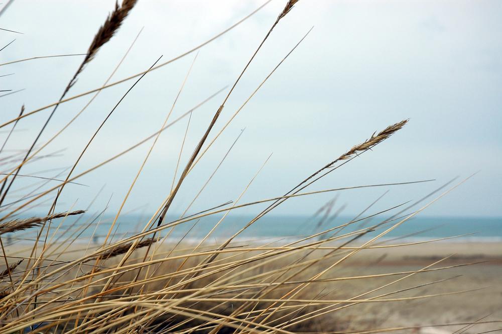 Coaching i naturen Naturens kraft i form af frisk luft, vind og sol udretter mirakler, åbner hjerner og hjælper at give slip.