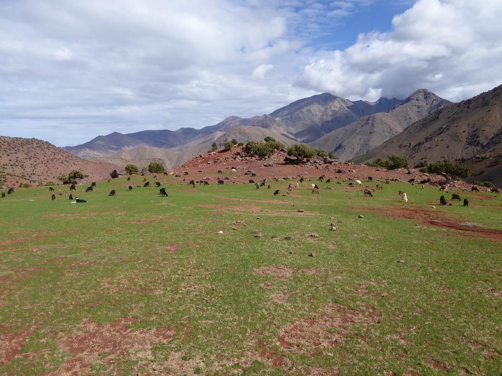 Coaching i Marokko? Ja! Det er også muligt! Læs mere om denne meget populære coachtur til Marokko.