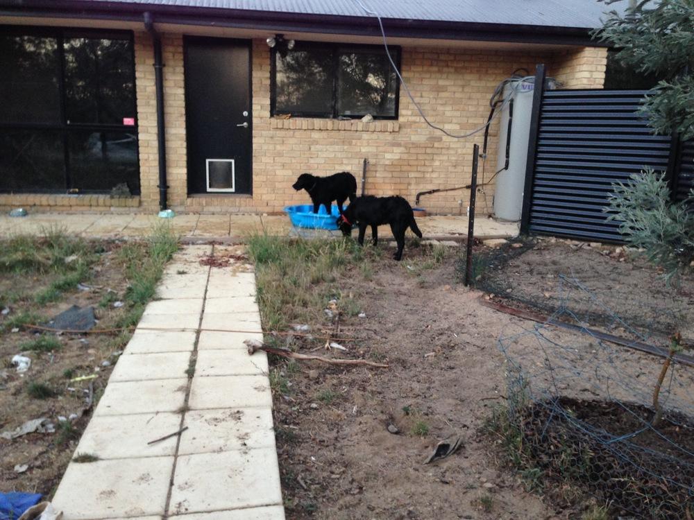 Backyard 4a.jpg