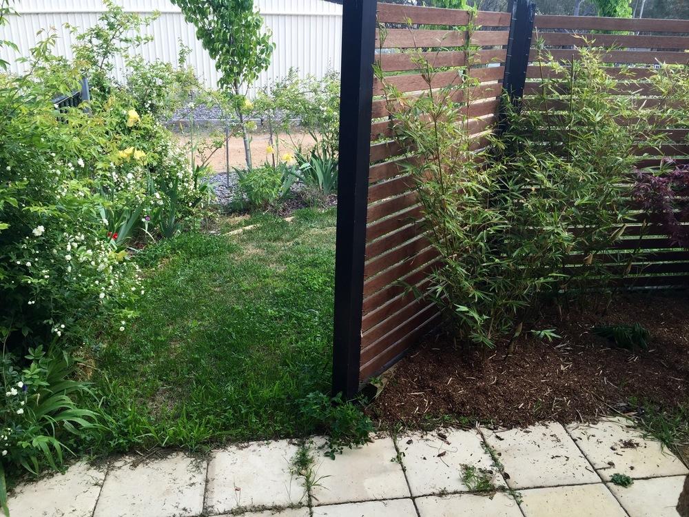 Backyard 5b.jpg