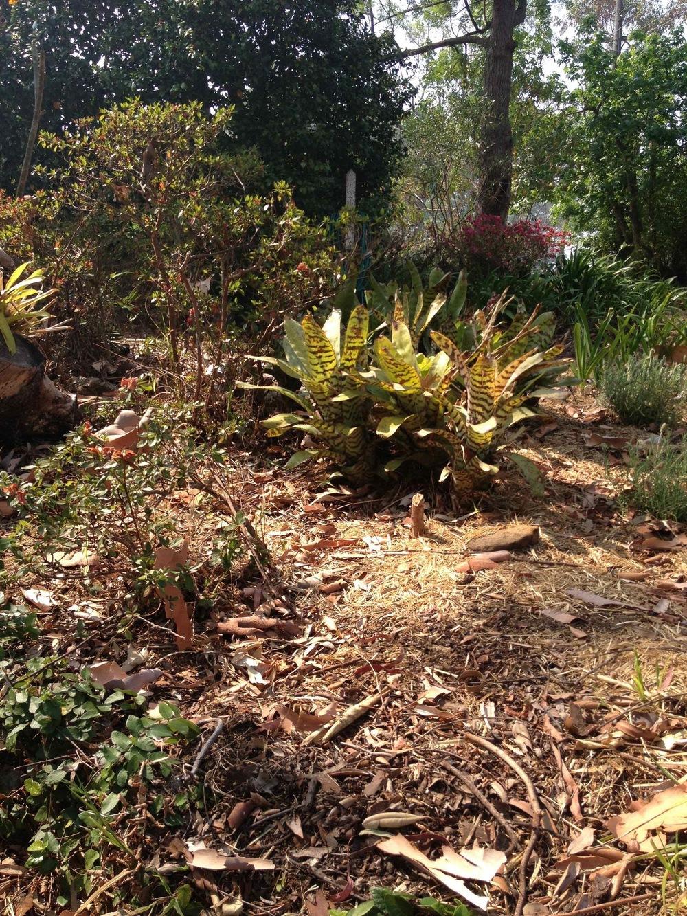 1. Front garden before 1.jpg