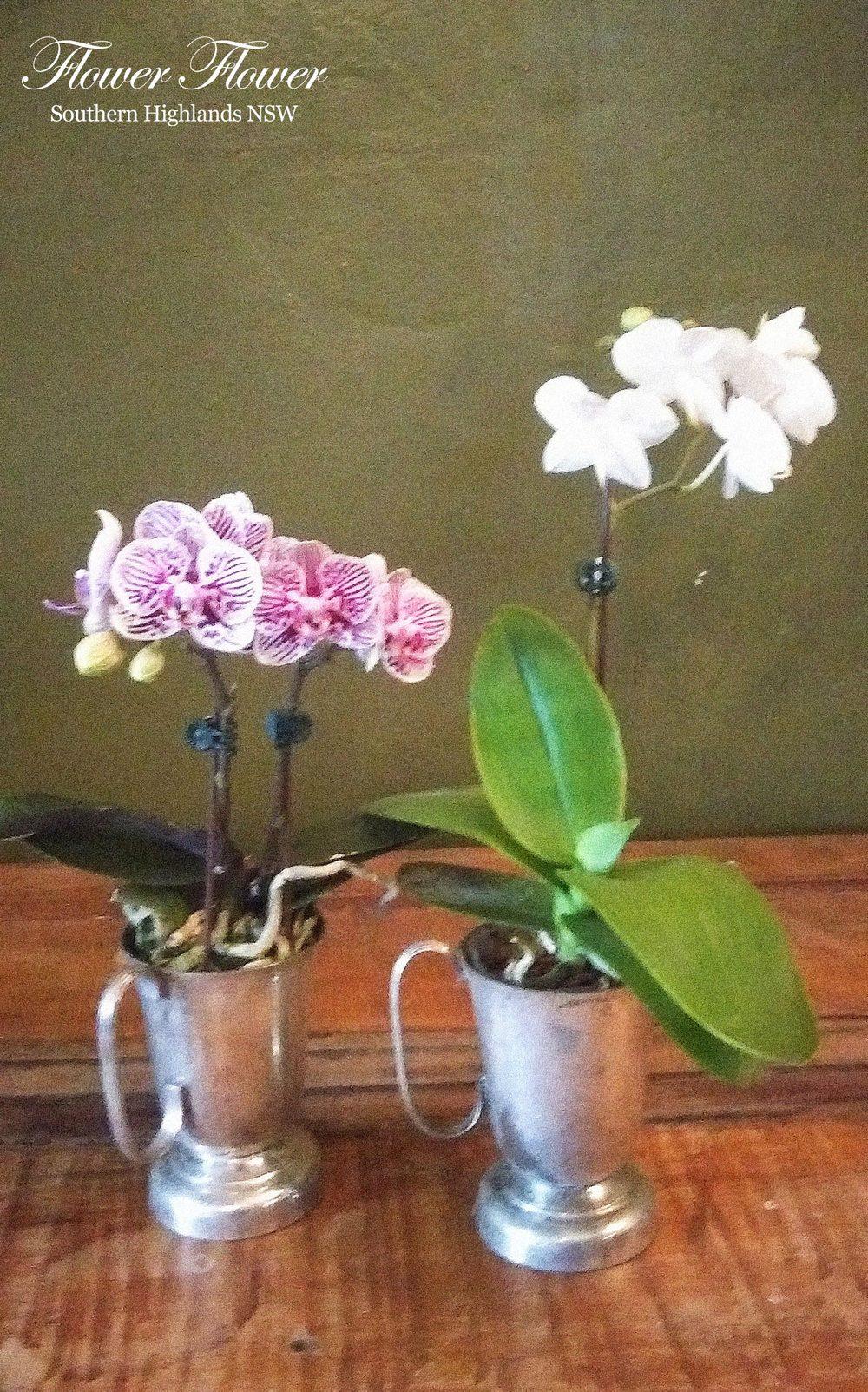 Orchid_2.jpg