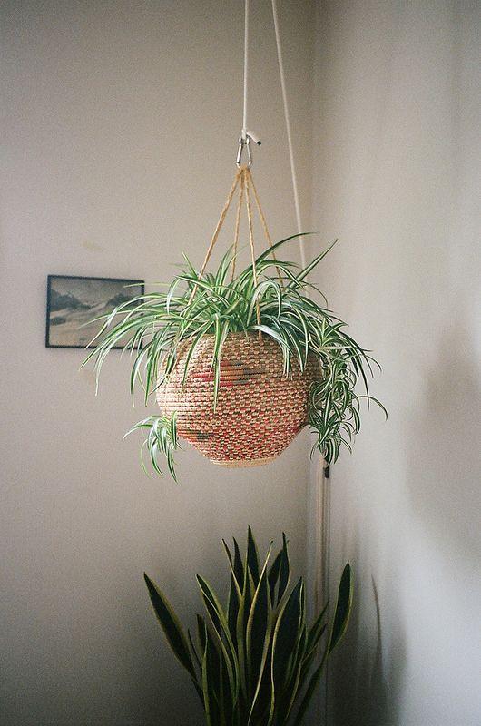 5 great indoor plants that you wont kill laura quattro - Great indoor houseplants ...