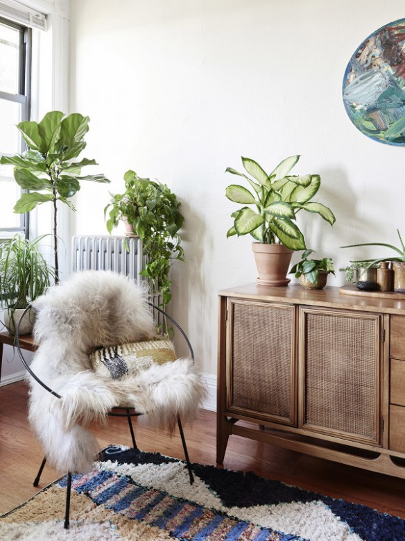 5 Great Indoor Plants That You Wont Kill Laura Quattro