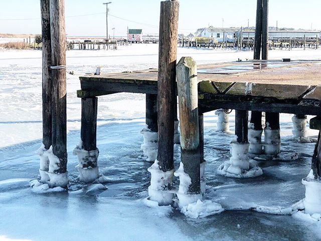 Tangier turns 332 this year. Two days ago backwater pilings looked like candles in their birthday cake. 🎂🌊 —————————— #tangier #oysters #chesapeakebay #LoveVA #VAoysters #oysterfarming #oysterlover #VirginiaIsForLovers #VirginiaIsForOysterLovers #VAisForOysterLovers #eastcoastoysters #virginiaoystertrail #VAoystertrail #VirginiaIsBeautiful #tangierislandva #tangierisland #savetangier