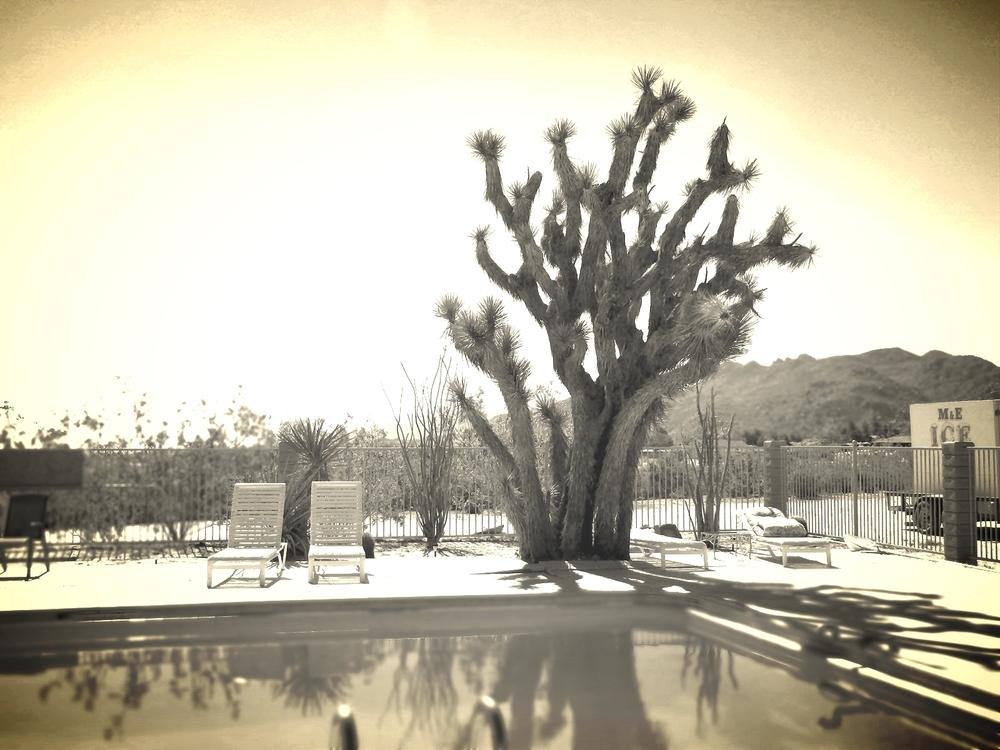 Joshua Tree Inn pool 1.jpg