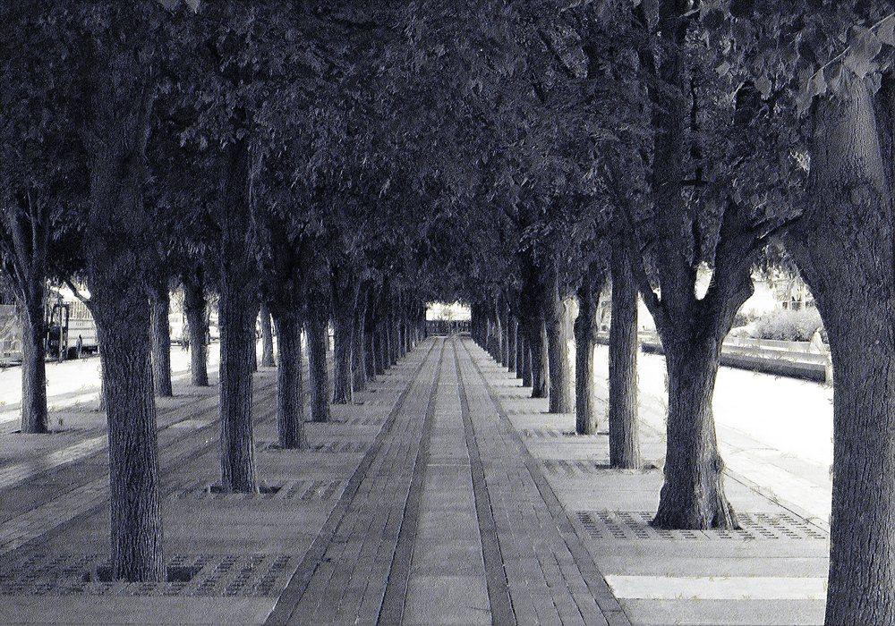 trees boston.jpg