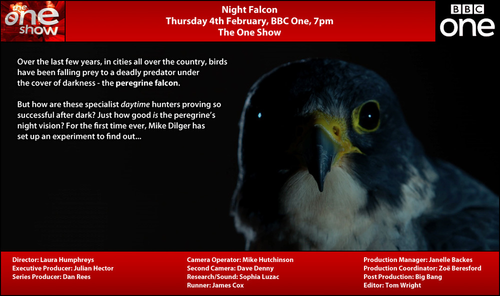 TX Card - Night Falcon.jpg