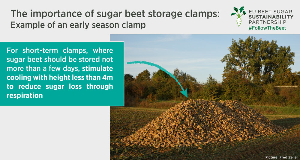 Sugar beet clamps.jpg