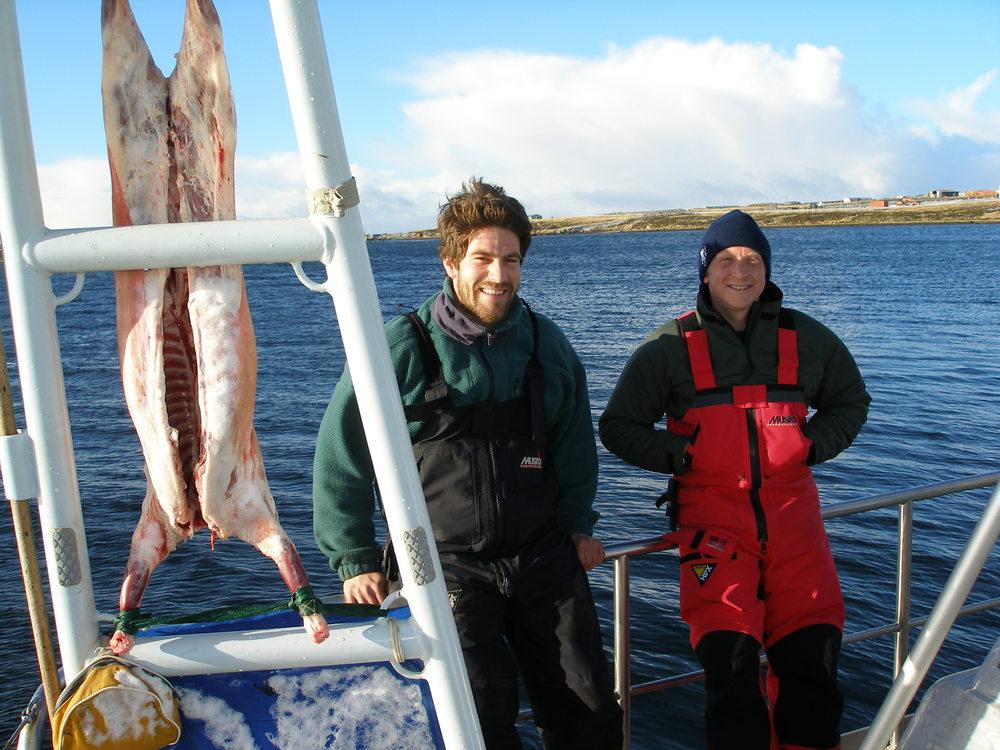 Pelagic Australis Falklands