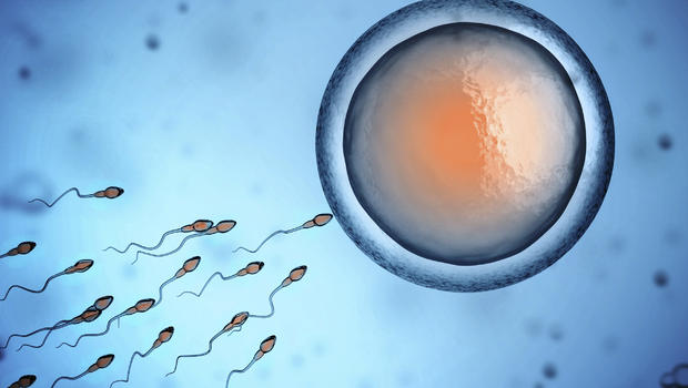 Sperm and egg.jpg