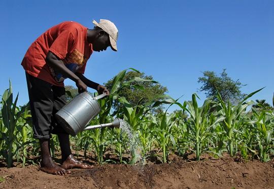 Farmer - Africa Business Communities.jpg