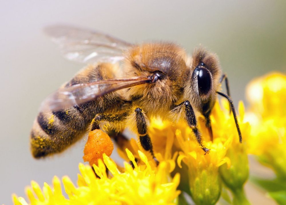 Bee - Dreamstime.jpg