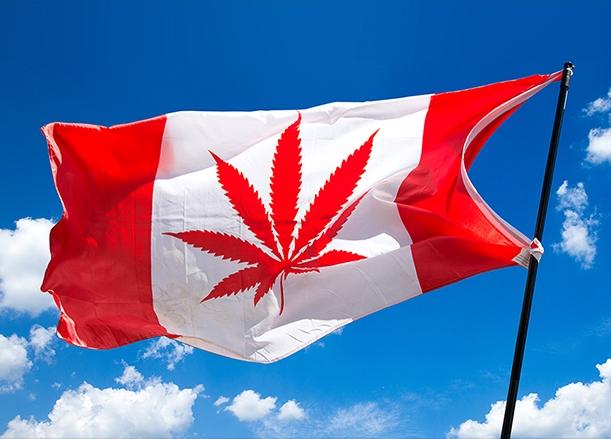 Canada pot flag - CNN.jpg