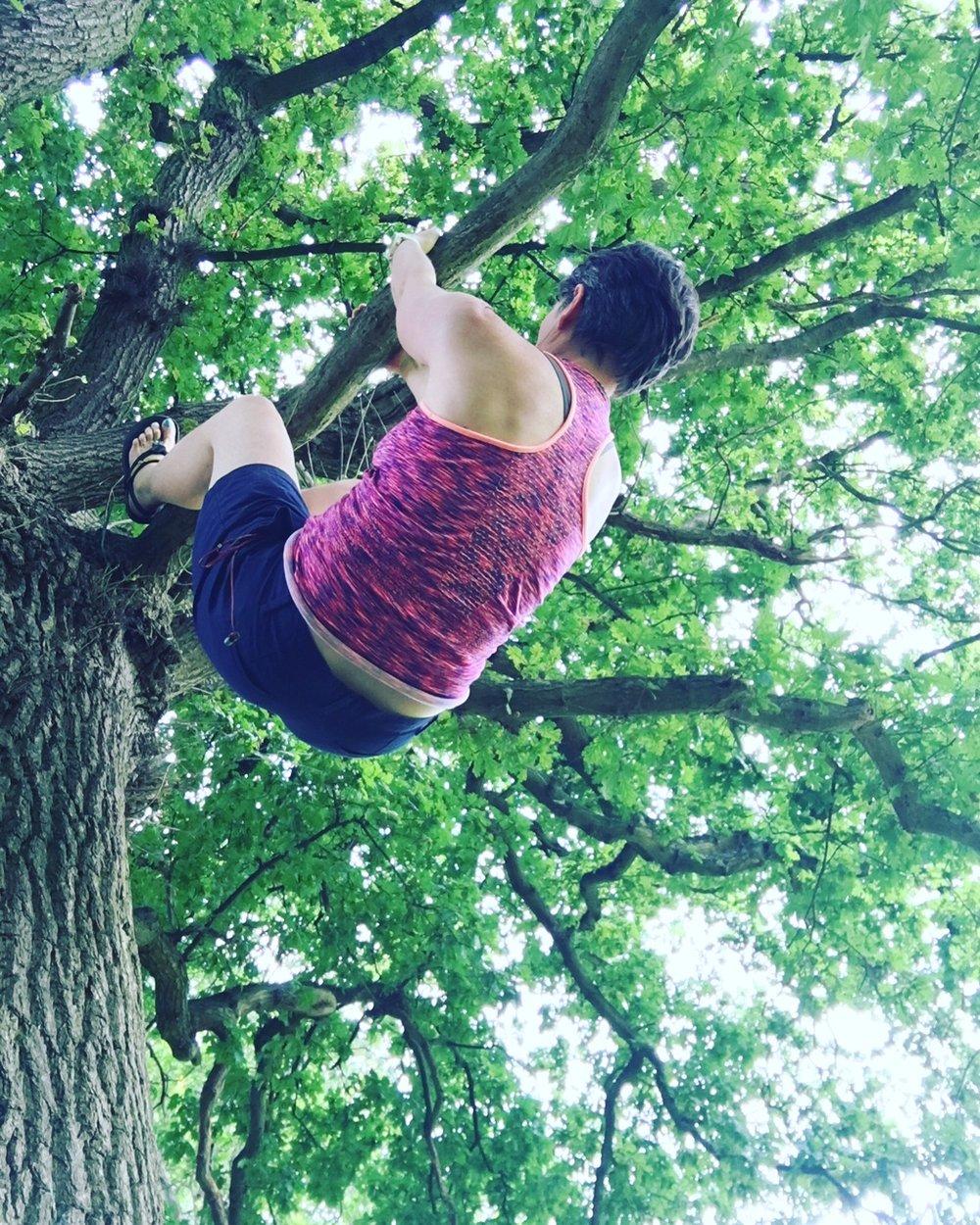 tree hanging.JPG