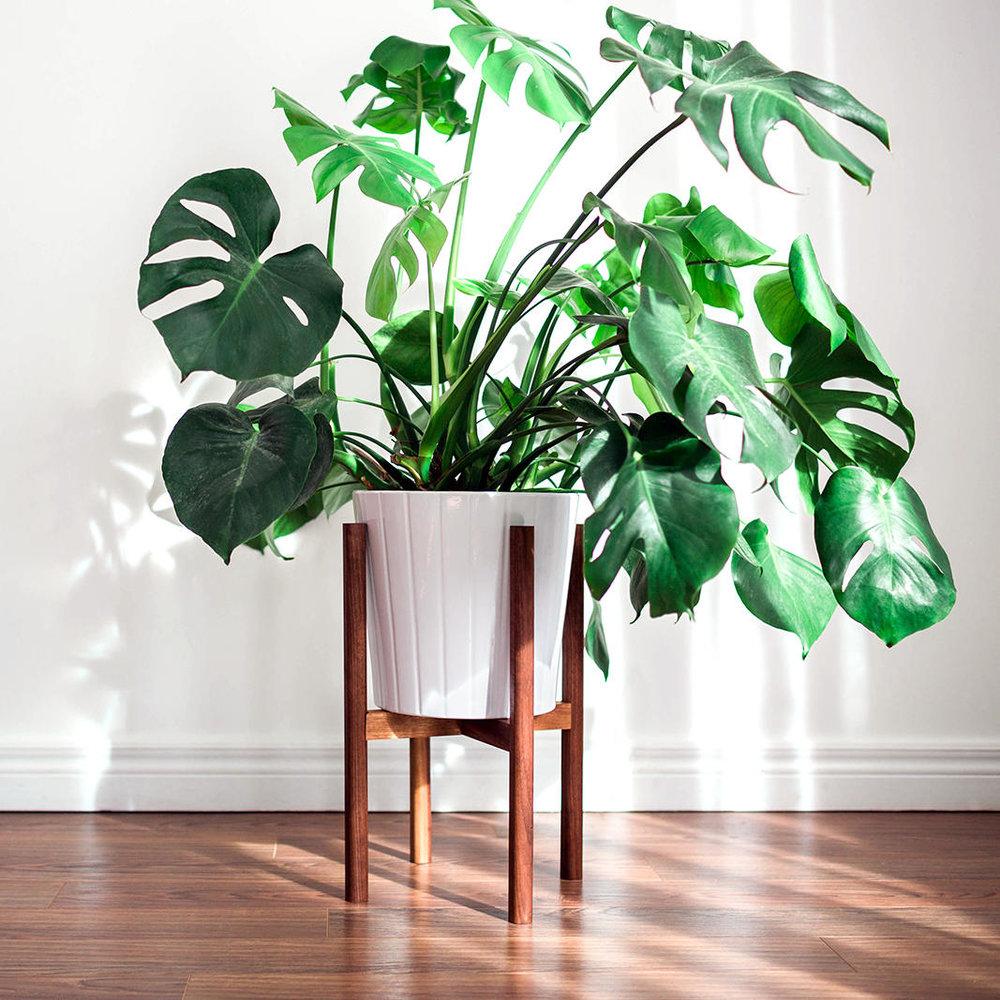 Hookandstem Mid Century Modern Plant Stand