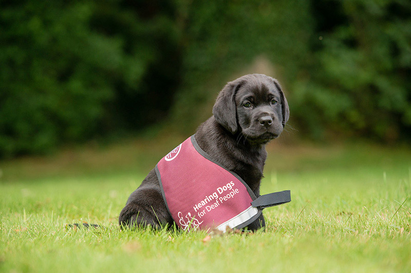 2-cani-hearing-dogs-i-migliori-amici-delle-persone-con-problemi-di-udito-udisens-news.jpg