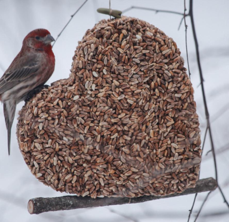 Jules Loft: Edible Garden Art - Birds think we're delicious!
