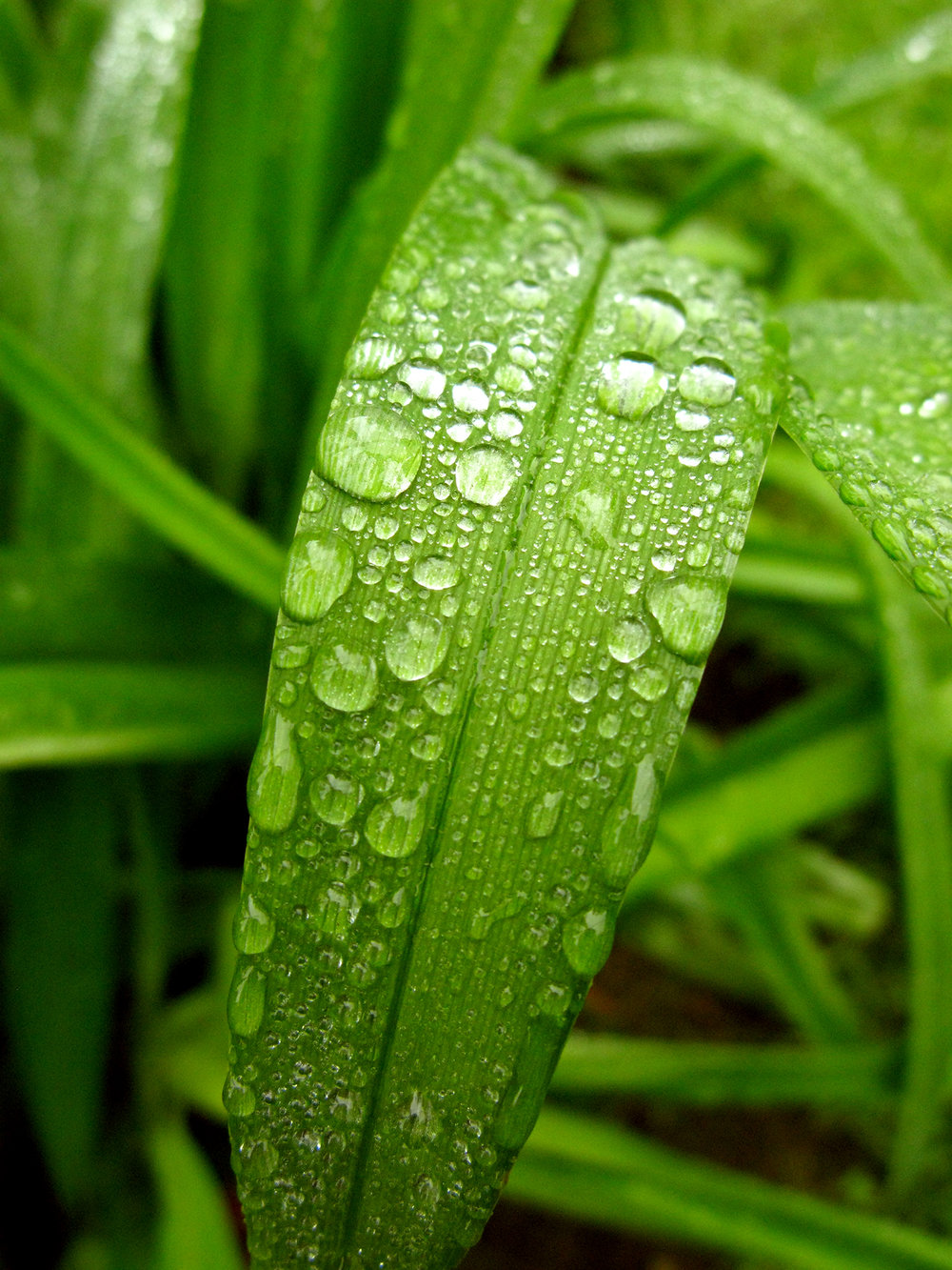 Raindrops On Grass 2.jpeg