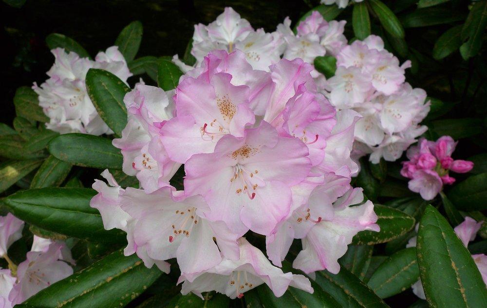 Japanese Garden Spring 1.jpg