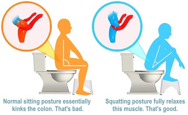 squat-poop-muscle.jpg