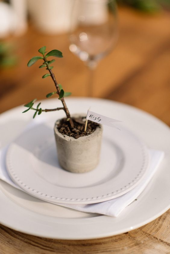 29-a-small-potted-succulent-in-a-concrete-planter-with-a-name-for-a-favor-and-place-card.jpg