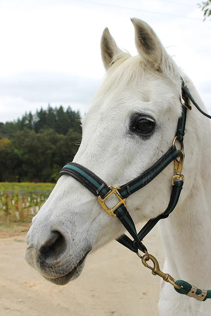 horses17.jpg