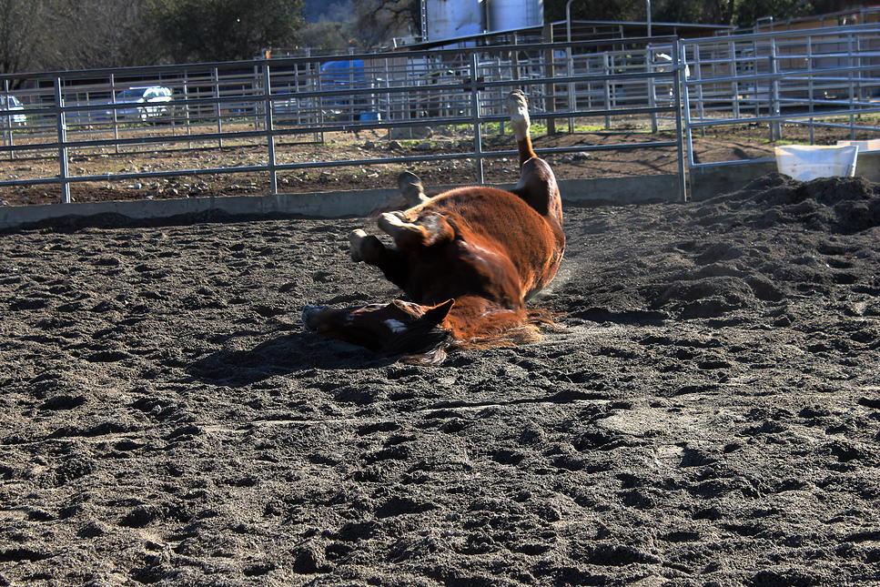 horses27.jpg
