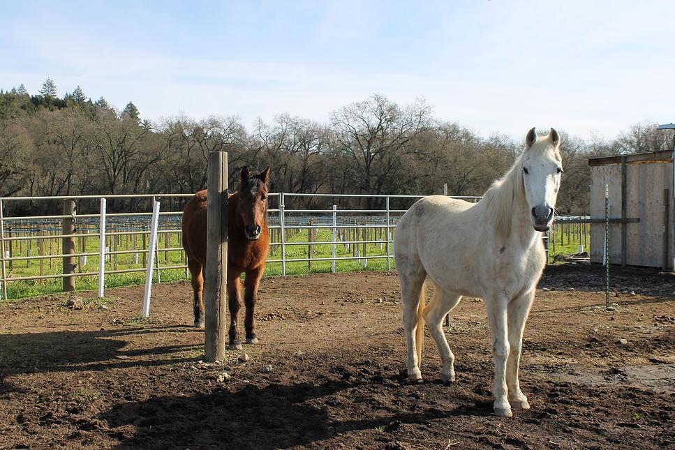 horses29.jpg