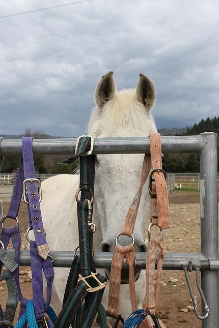 horses31.jpg