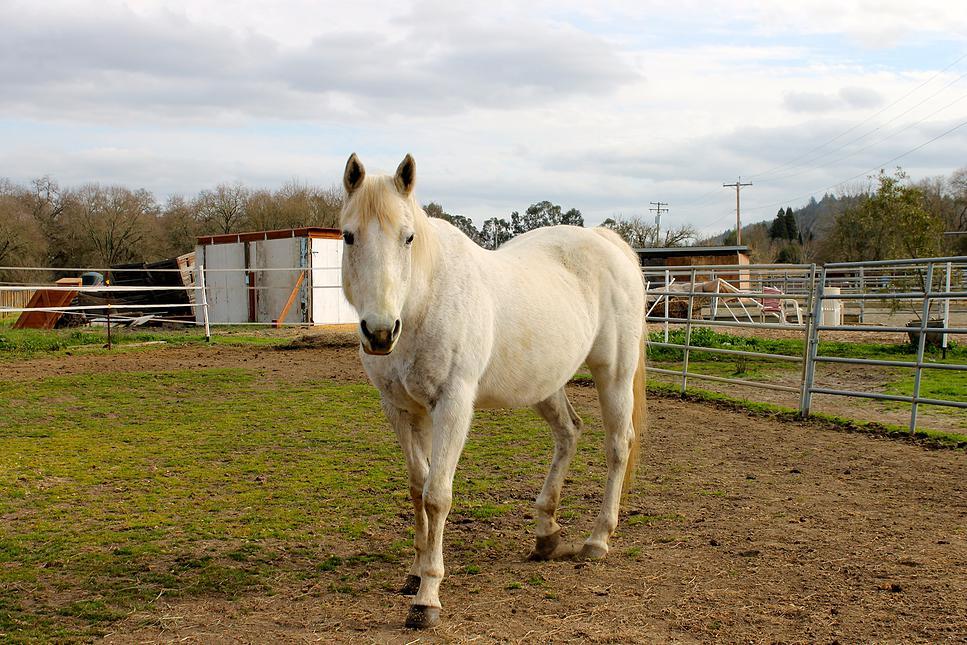 horses37.jpg