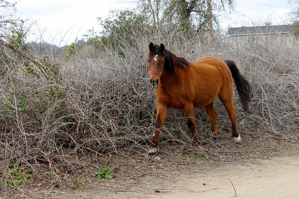 horses38.jpg