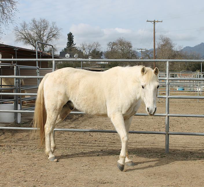 horses32.jpg