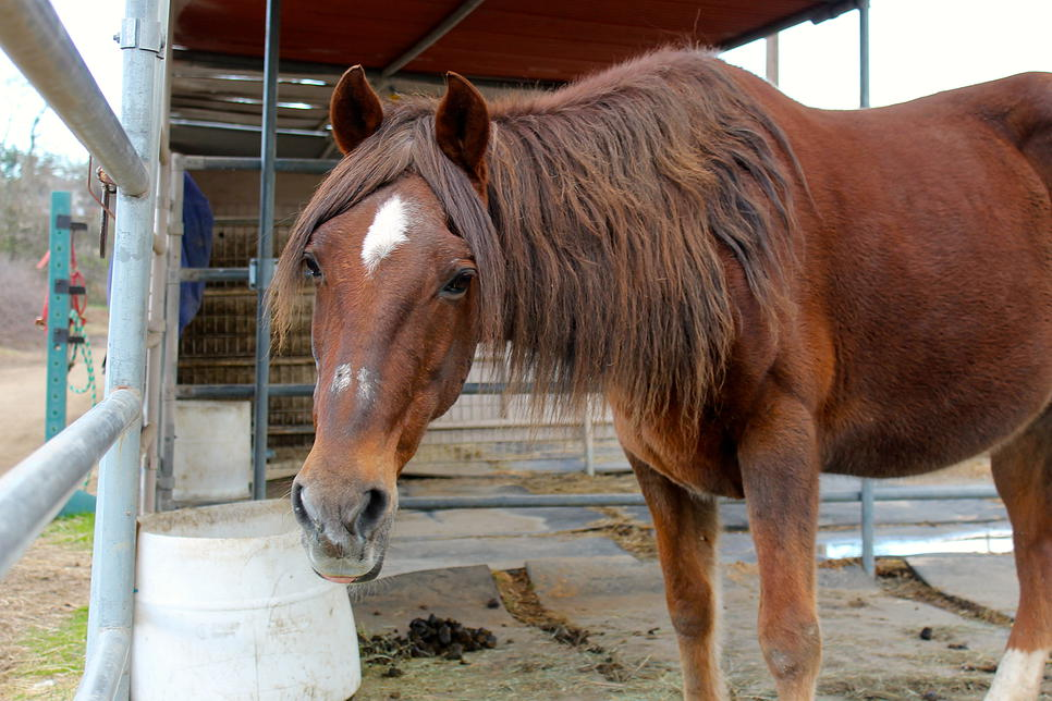 horses46.jpg