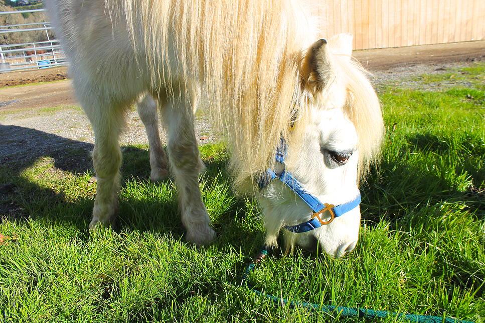 horses45.jpg