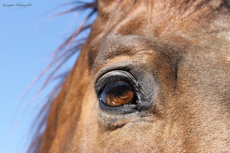 horses52.jpg